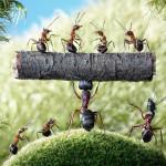 Câu chuyện về những con kiến